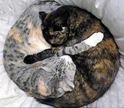 yinyangcats