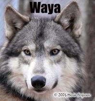 Waya-FINAL