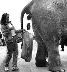 elephant-poop
