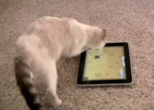 game-for-cats-ipad